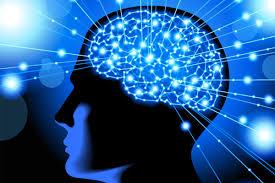 Neurocyclin - pro lepší paměť – recenzije – sastav – Amazon